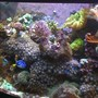 180 gallons reef tank (mostly live coral and fish) - a pic