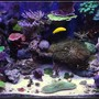 65 gallons reef tank (mostly live coral and fish) - 1 1/2 year old reef tank.... Primarily SPS.....