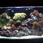 110 gallons reef tank (mostly live coral and fish) - Aquarium