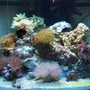 37 gallons reef tank (mostly live coral and fish) - 54 reef