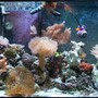 65 gallons reef tank (mostly live coral and fish) - whole tank