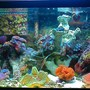 10 gallons reef tank (mostly live coral and fish) - This is the most recent pic of my main tank!