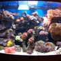 40 gallons reef tank (mostly live coral and fish) - FTS
