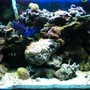 29 gallons reef tank (mostly live coral and fish) - my tank