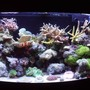 47 gallons reef tank (mostly live coral and fish) - 180 litre mixed reef