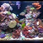 65 gallons reef tank (mostly live coral and fish) - July 2010