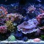 150 gallons reef tank (mostly live coral and fish) - 150g SPS