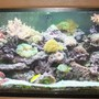 125 gallons reef tank (mostly live coral and fish) - My Reef Tank That i built into my pool room wall