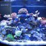 10 gallons reef tank (mostly live coral and fish) - 36 G