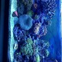 30 gallons reef tank (mostly live coral and fish) - 30 gallon beauty, plenty of stock for a small tank :)