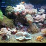 55 gallons reef tank (mostly live coral and fish) - 20 gallon 30x12x12 nano