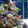 46 gallons reef tank (mostly live coral and fish) - Side view