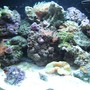 12 gallons reef tank (mostly live coral and fish) - 12g nano