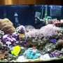 46 gallons reef tank (mostly live coral and fish) - A front view of the tank