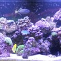 240 gallons reef tank (mostly live coral and fish) - 240 gallon reef tank