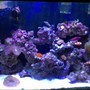 45 gallons reef tank (mostly live coral and fish) - Tank