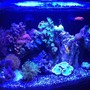 16 gallons reef tank (mostly live coral and fish) - 16 Nuvo