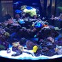 92 gallons reef tank (mostly live coral and fish) - 92 gallon Oceanic 1/4 circle. Up and running 14 months.