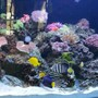 260 gallons reef tank (mostly live coral and fish) - 260 gallon reef tank with various fish