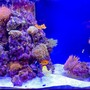 90 gallons reef tank (mostly live coral and fish) - My 90 gal Saltwater Tank