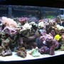 72 gallons reef tank (mostly live coral and fish) - Makes you wonder why there is something rather than nothing.