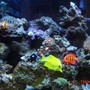 38 gallons reef tank (mostly live coral and fish) - 38 Gallon Reef
