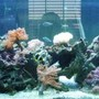 75 gallons reef tank (mostly live coral and fish) - 75 gallon tank