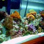 75 gallons reef tank (mostly live coral and fish) - An image of my 75 gallon reef tank.