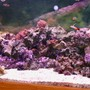 180 gallons reef tank (mostly live coral and fish) - new pic finally