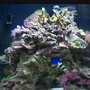 14 gallons reef tank (mostly live coral and fish) - This is our brand new 14 gallon oceanic biocube, it has only been running for about a month now, enjoy... 1/15/07
