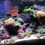 125 gallons reef tank (mostly live coral and fish) - Better Pic of my 125