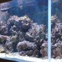 75 gallons reef tank (mostly live coral and fish) - 75 gal, 80 lbs live rock, 90 lbs live sand. fish are a yellow tang, kole tang, two clowns, spotted mandarin, and a cleaner shrimp.