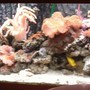 55 gallons reef tank (mostly live coral and fish) - Jewel 240 reef tank