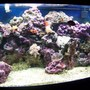 72 gallons reef tank (mostly live coral and fish) - Front view, close up setting, no flash