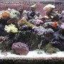 180 gallons reef tank (mostly live coral and fish) - Full Tank Display