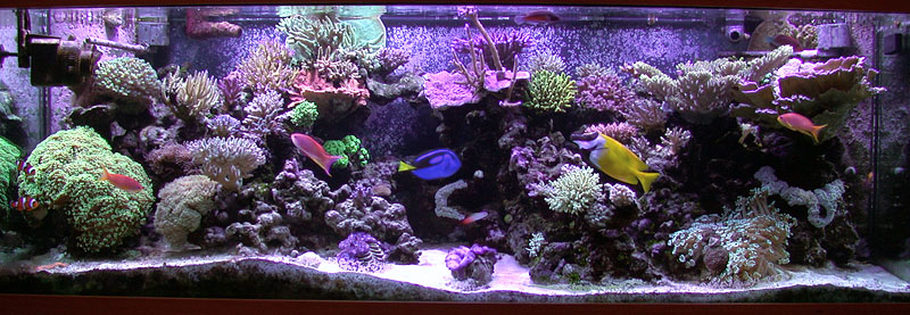Saltwater Fish Articles