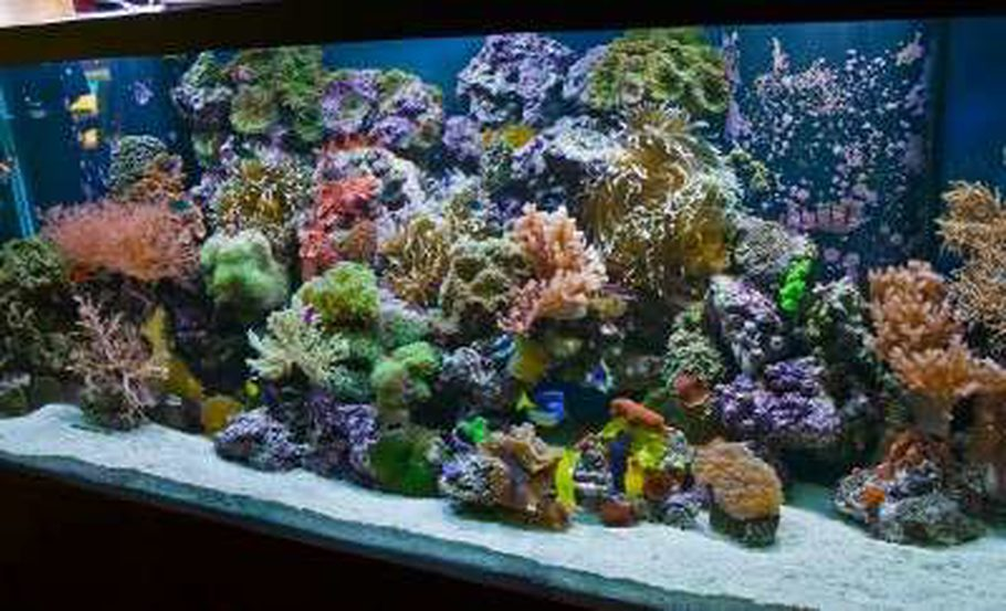 220 Reef By Aquariums Sissy Midland TX Full Tank Shot