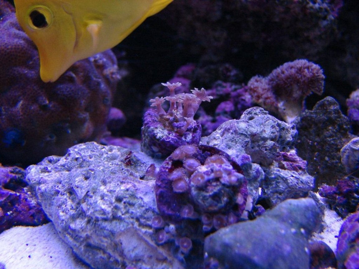 corals inverts stocking in 75 gallons tank - Mystery Coral