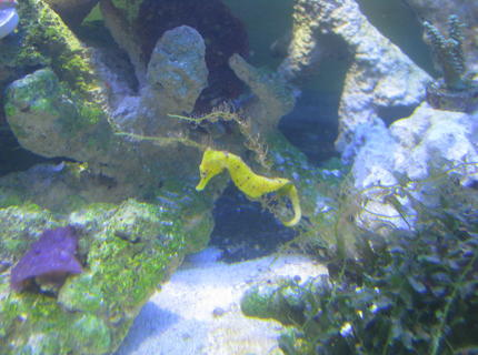 corals inverts stocking in 180 gallons tank - See the horse