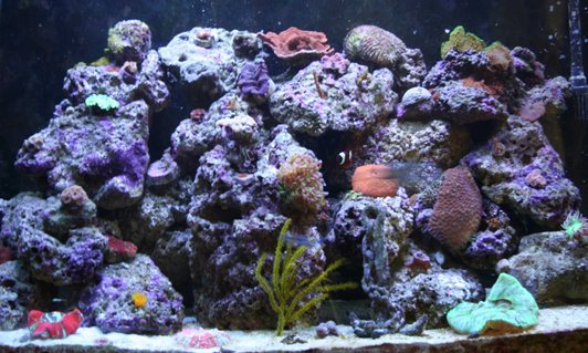Rated #54: Corals Inverts Stocking In 110 Gallons Tank - Main Picture check this picture soon, since I have added a couple things since.