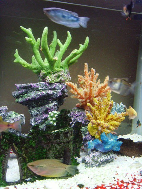 Rated #94: Corals Inverts - Acropora Sp. - Acropora Coral Stocking In 23 Gallons Tank - my fish