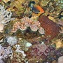 corals inverts - zoanthus sp. - colony polyp - 120 reef tank 2 400 20,000K 6 55 blue PC Tide pool 2 tons of fish and coral and inverts