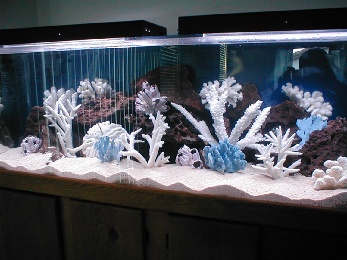 saltwater fish tank (mostly fish, little/no live coral) - Tight tank!