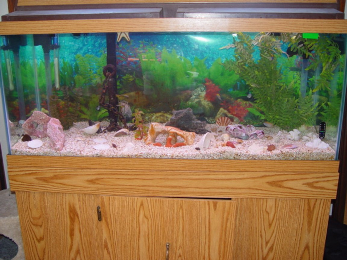 75 gallons saltwater fish tank (mostly fish, little/no live coral)