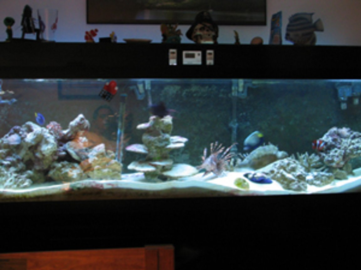 125 gallons saltwater fish tank (mostly fish, little/no live coral)