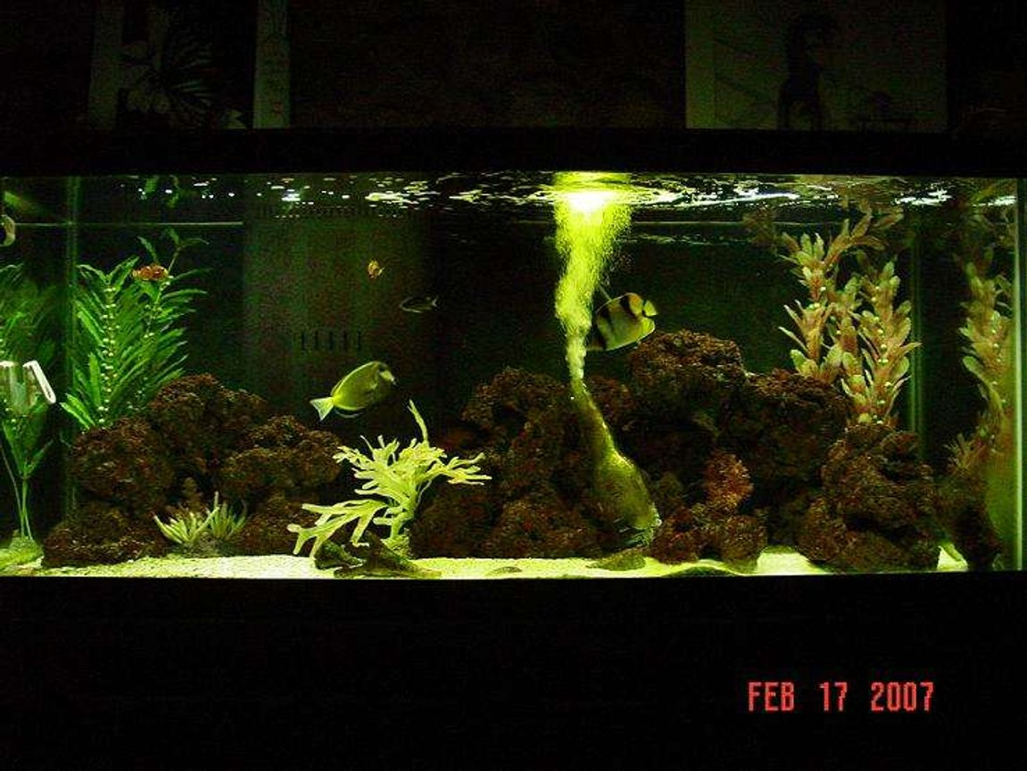 75 gallons saltwater fish tank (mostly fish, little/no live coral) - new photo