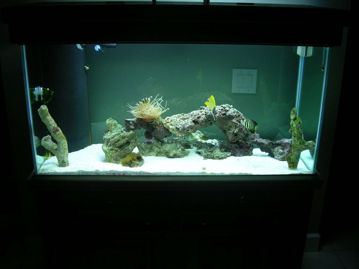 90 gallons saltwater fish tank (mostly fish, little/no live coral) - Compliments to Fish Of Eden for guiding me to a great start to my reef tank!