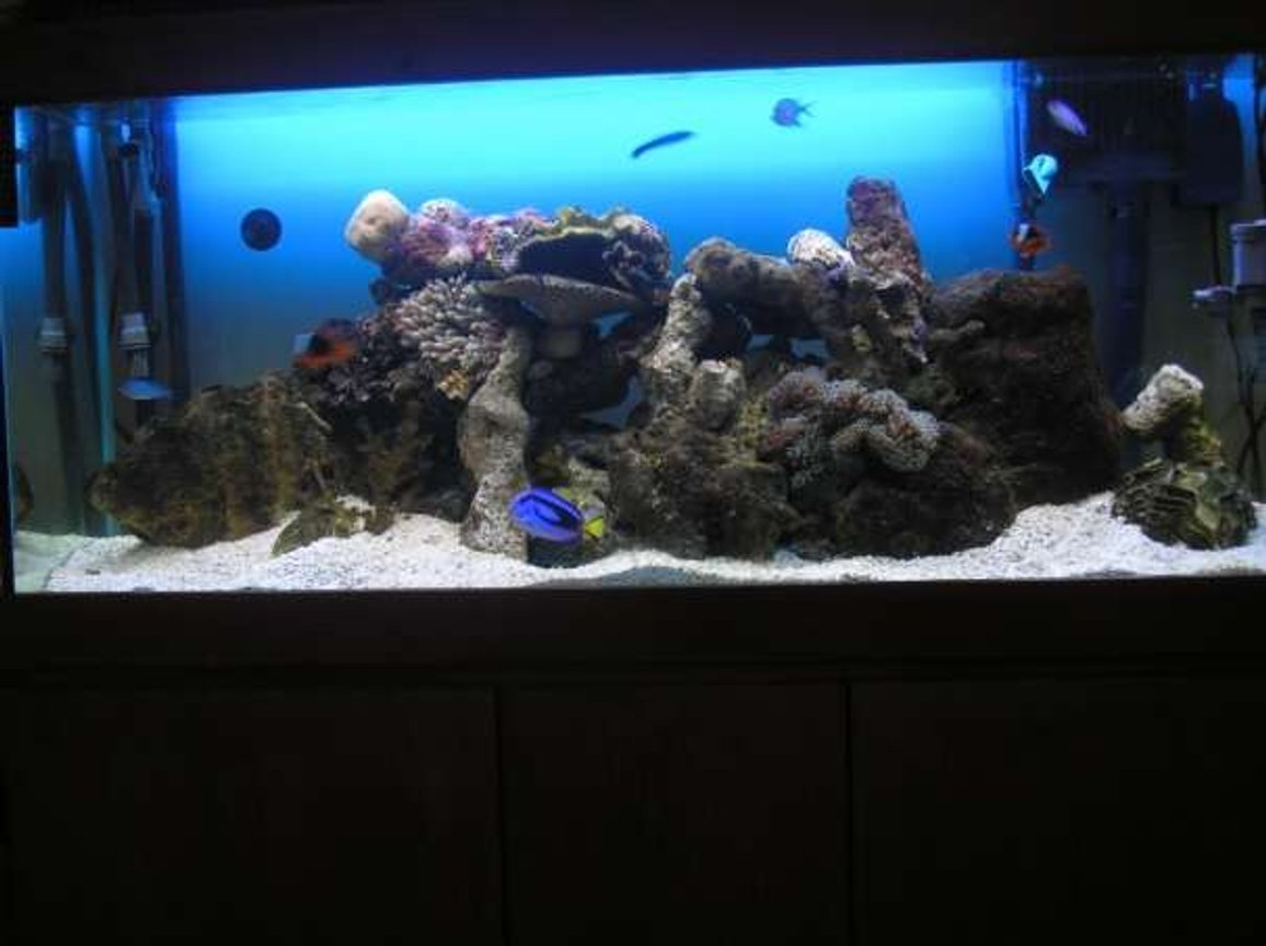 200 gallons saltwater fish tank (mostly fish, little/no live coral) - my 4 foot tank with 2 new anenomes & live rock. 2 tomato clowns, 1 coral beauty,1 blue tang,1 zebra humbug,1 cleaner wrasse, 4 blue schooling fish,2 hermits, 1 skunk shrimp,5 snails. heaps of live rock, clam shells. getting ready to add corals + maybe another fish