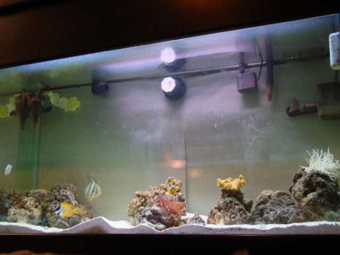 110 gallons saltwater fish tank (mostly fish, little/no live coral) - begining stage
