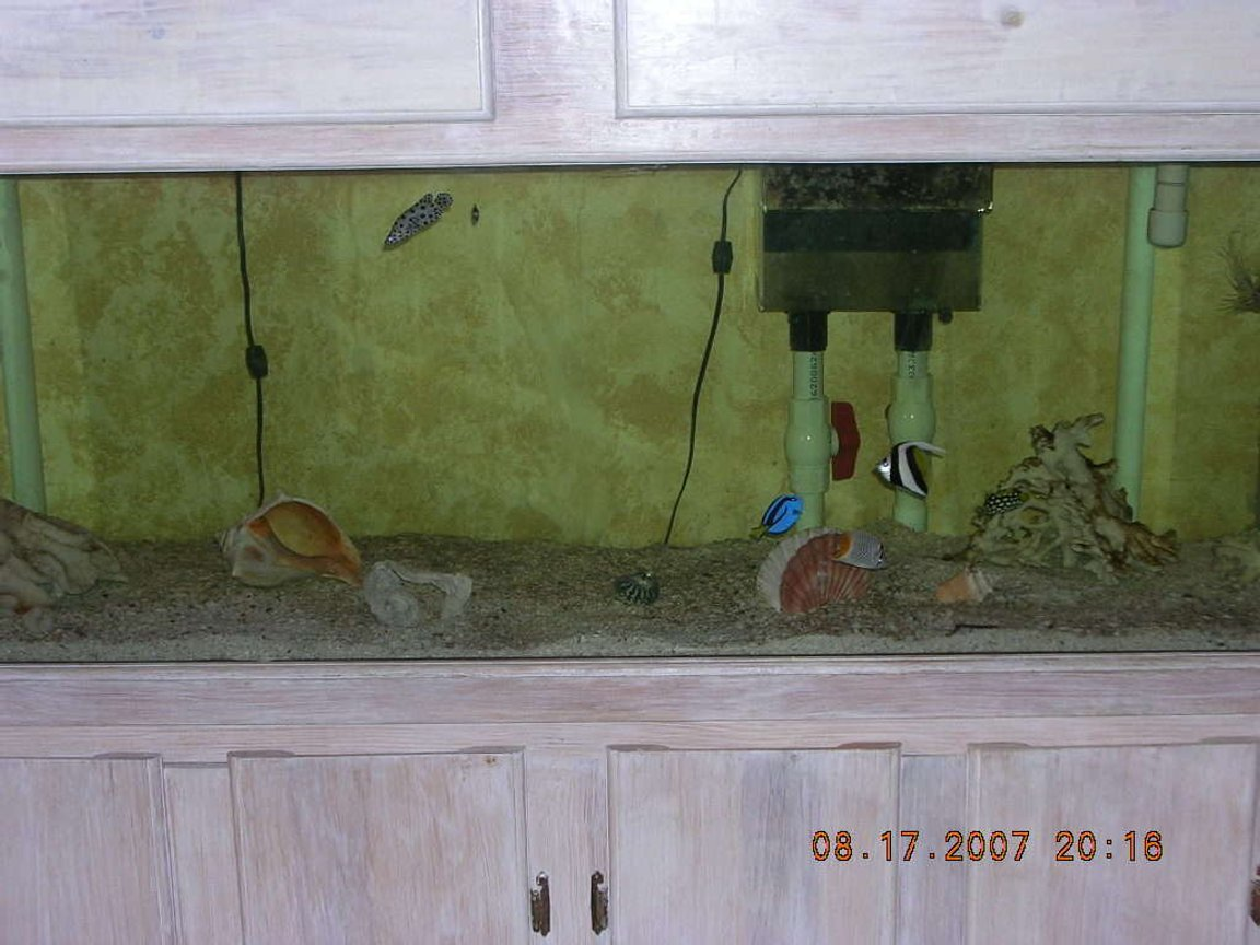 100 gallons saltwater fish tank (mostly fish, little/no live coral) - 100 GAL SALTWATER TANK, W WET/DRY FILTRATION AND CRUSHED CORAL ROCK ITS 3 MONTHS OLD